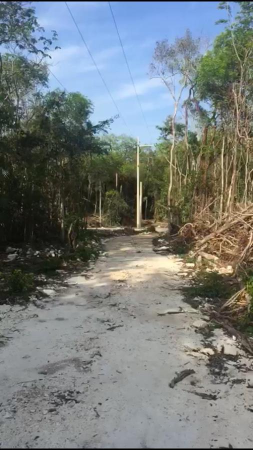 Foto Terreno en Venta en  Tulum ,  Quintana Roo  TERRENO EN VENTA EN TULUM QUINTANA ROO