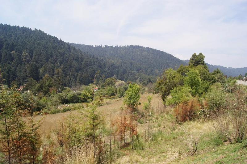 Foto Terreno en Venta en  Cañada de Alférez,  Lerma  Cañada de Alferez, Ler. Edo. Mex. Hermoso Terreno en zona boscosa ideal para Desarrollo Habitacional.