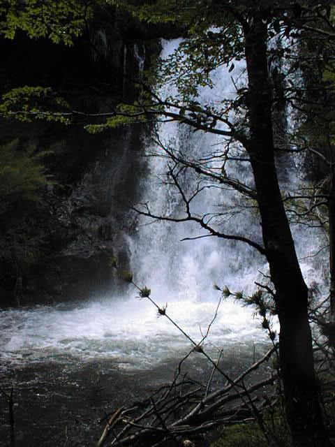 Foto Campo en Venta en  Esquel,  Futaleufu  Parque Nacional Los Alerces