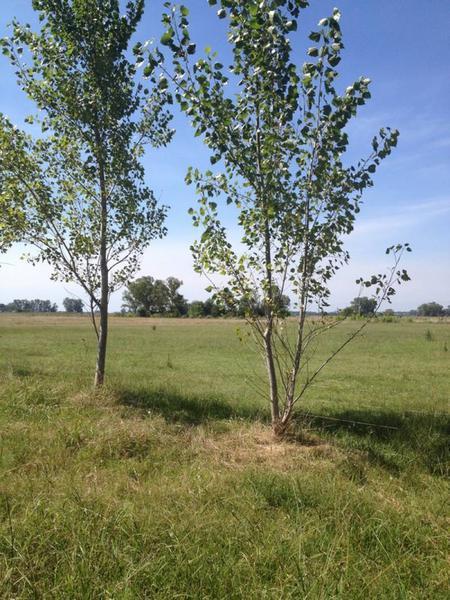Foto Campo en Venta en  Villars,  General Las Heras  Chacras de Villars 1