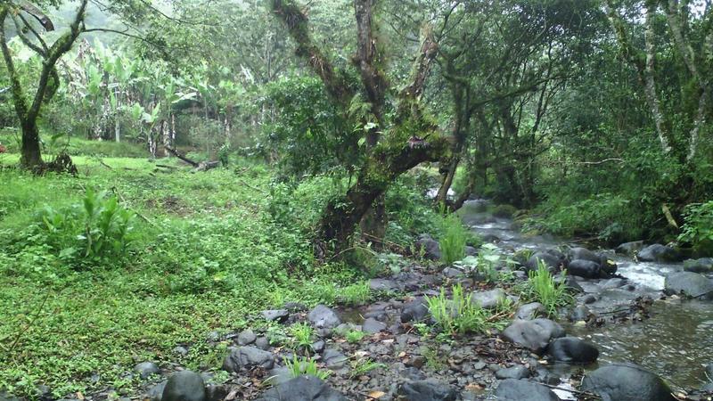 Foto Terreno en Venta en  Úrsulo Galvan,  Xico  Venta Precioso Terreno junto al Río. $330,000 Xico, Veracruz.