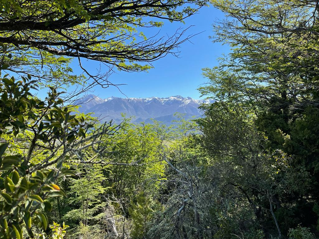 Foto Terreno en Venta en  Arelauquen,  Bariloche  Terrazas del Polo - Alto Arelauquen