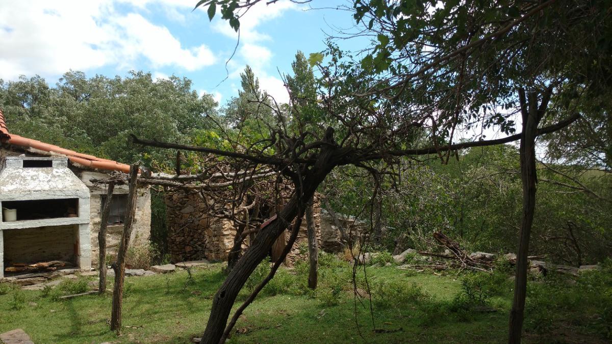 Foto Campo en Alquiler en  Ambul,  San Alberto  La Cienaguita