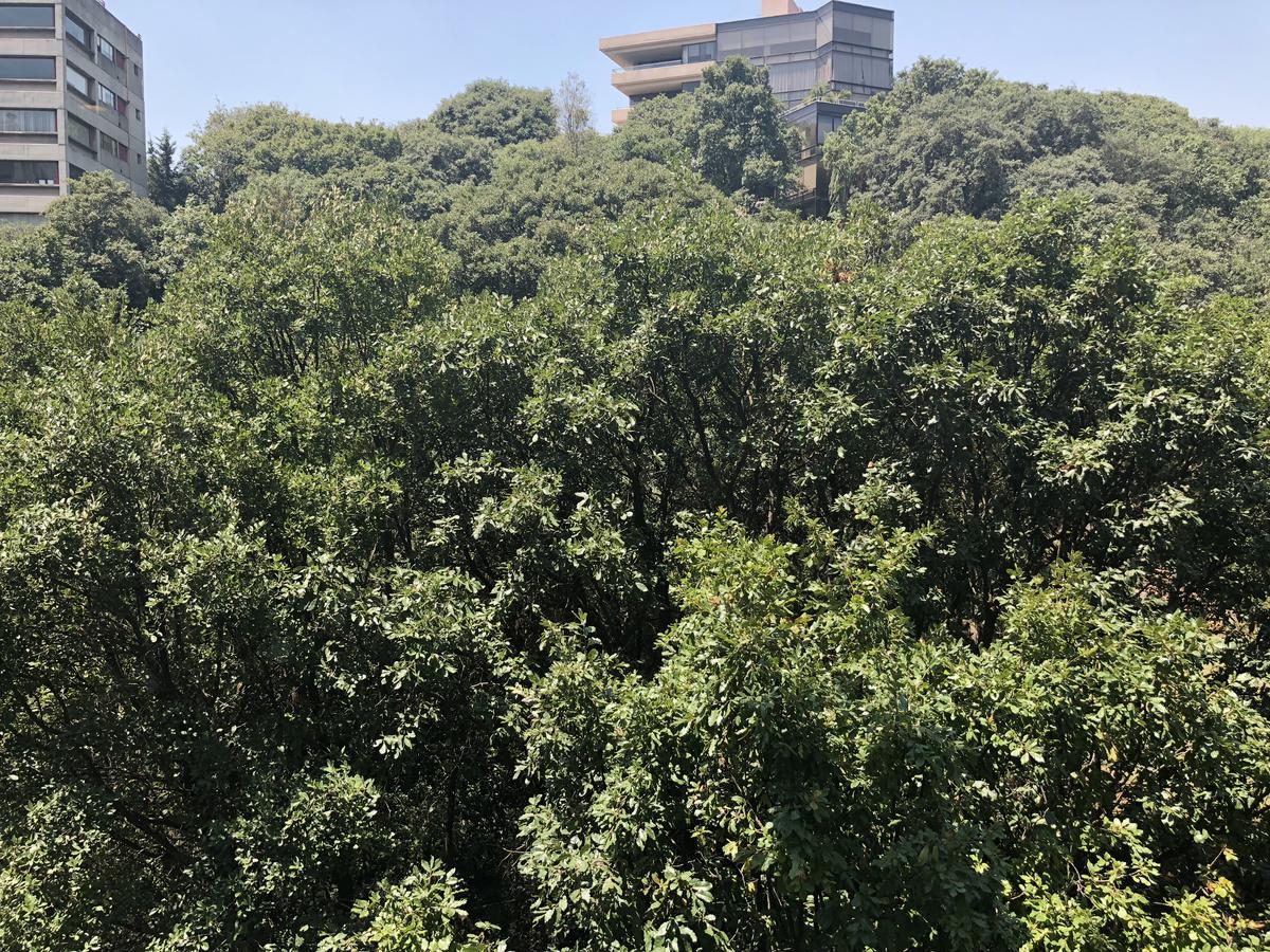Foto Departamento en Venta   Renta en  Miguel Hidalgo ,  Ciudad de Mexico  VENTA/RENTA DEPARTAMENTO CON AMENIDADES EN BOSQUES DE LAS LOMAS