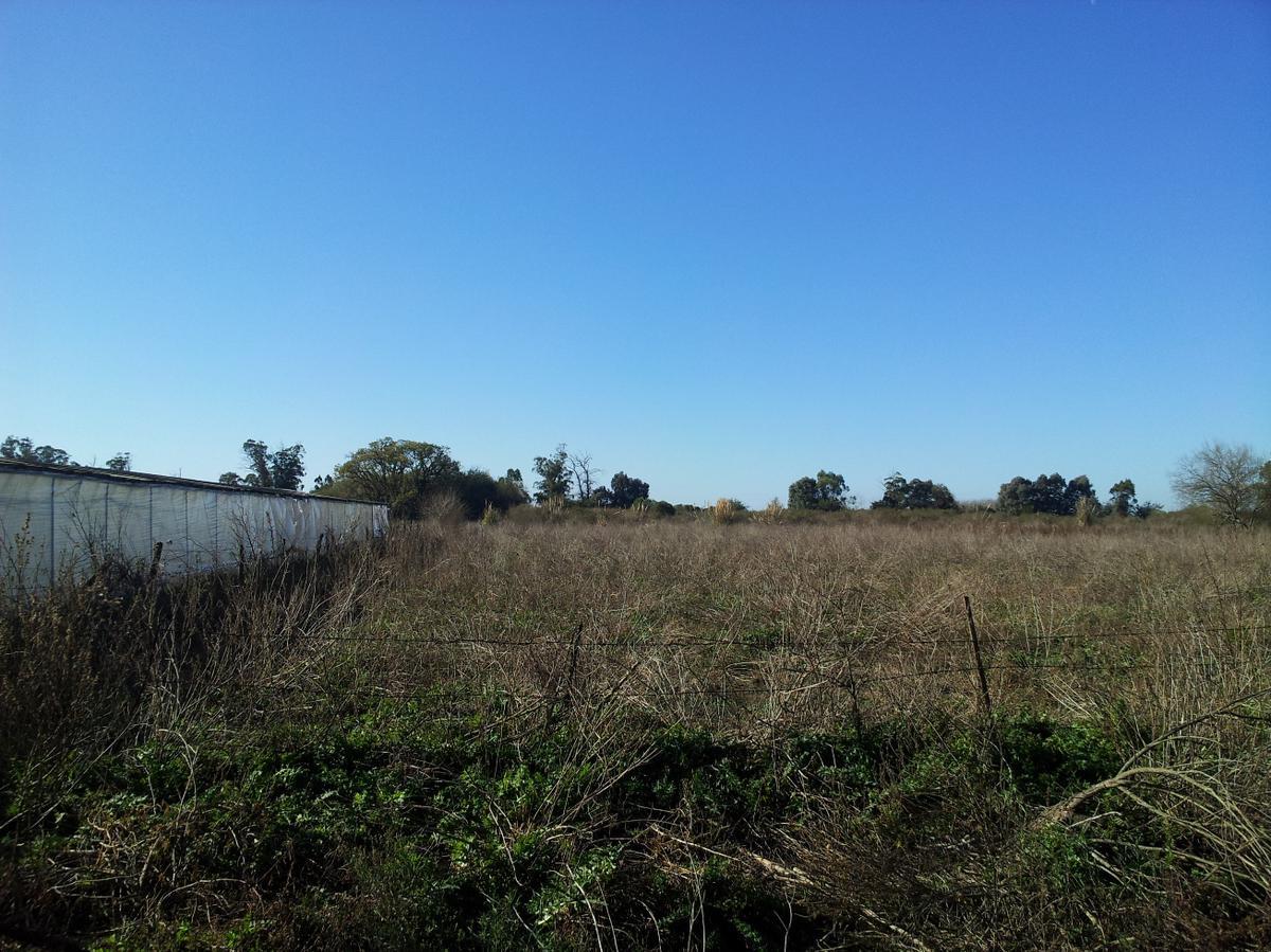Foto Campo en Venta en  Arturo Segui,  La Plata  216 y 438