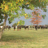 Foto Terreno en Venta en  Greenville Polo & Resort,  Countries/B.Cerrado (Berazategui)  greenville Barrio C lote 17