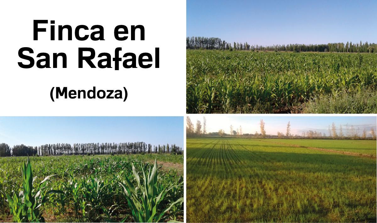 Foto Finca en Venta en  San Rafael ,  Mendoza  Finca en San Rafael - Mendoza