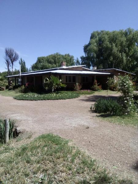 Foto Campo en Venta en  San Rafael ,  Mendoza  Ruta 177