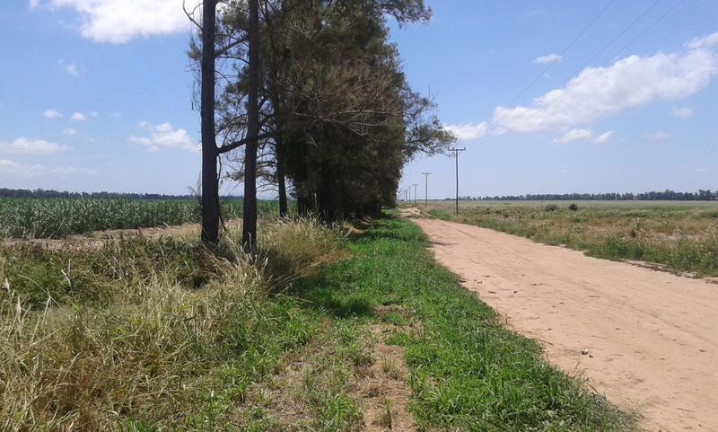 Foto Campo en Venta en  Pichanal,  Oran  Pichanal
