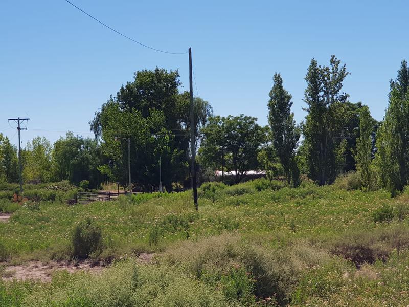 Foto Farms en Alquiler en  Lavalle ,  Mendoza  Ruta 40, Km 31. Lavalle