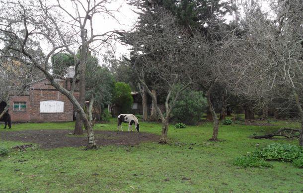 Foto Casa en Venta en  Mar Del Plata ,  Costa Atlantica  SCAGLIA Y  LOS GRANADOS  MAR DEL PLATA
