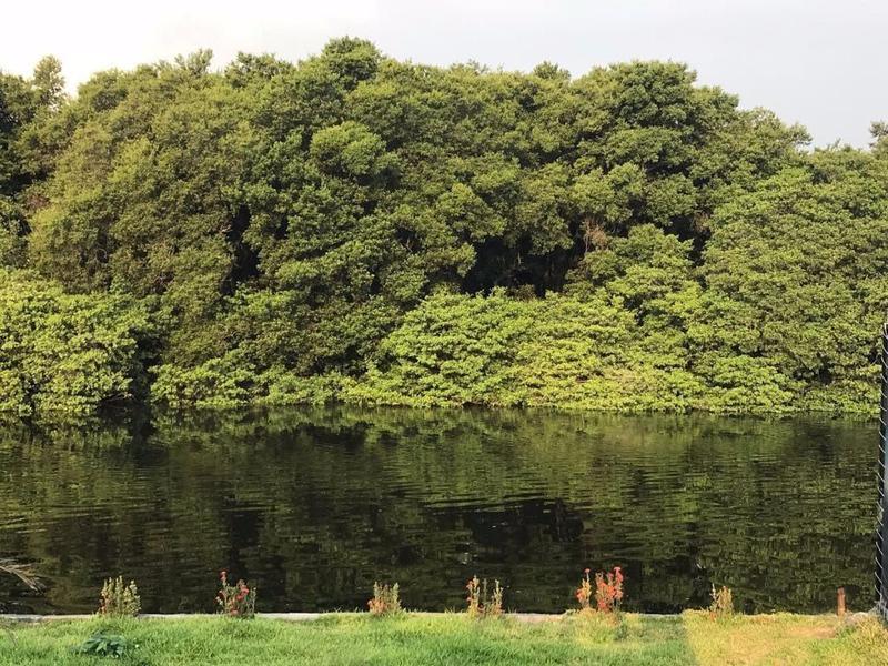 Foto Departamento en Venta en  Ricardo Flores Magón,  Boca del Río  Venta Penthose de Lujo Boca del Río, Ver (Vista al Manglar)