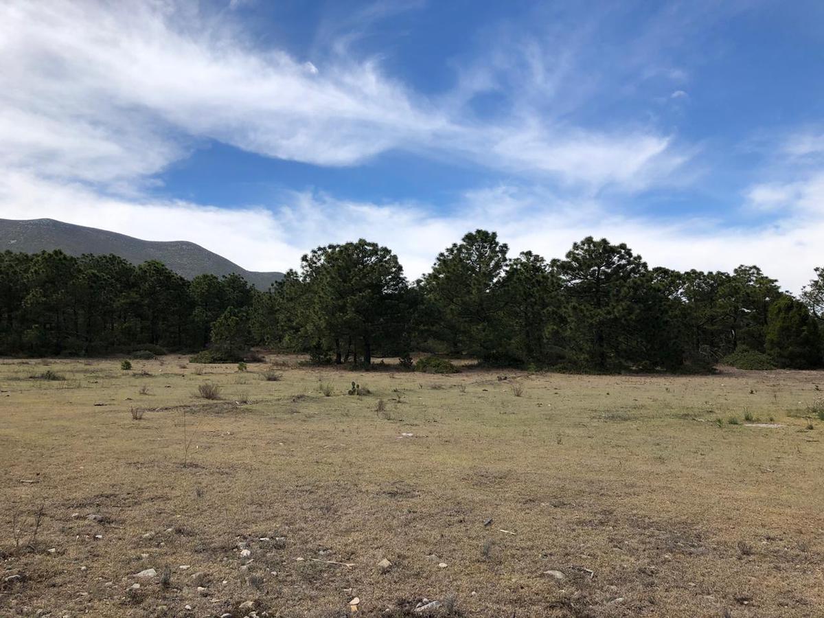 Foto Terreno en Venta en  La Ascensión,  Aramberri  Cerro Grande