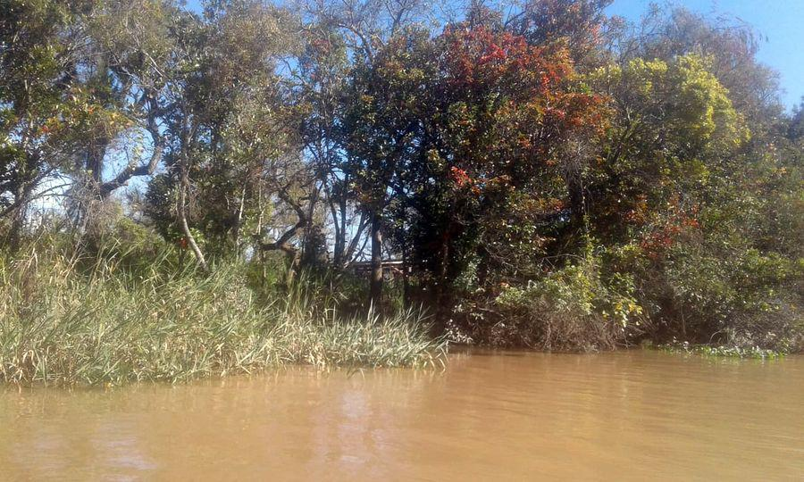 Foto Terreno en Venta en  9 de Julio,  Zona Delta Tigre  Ar. 9 de julio Lote  65