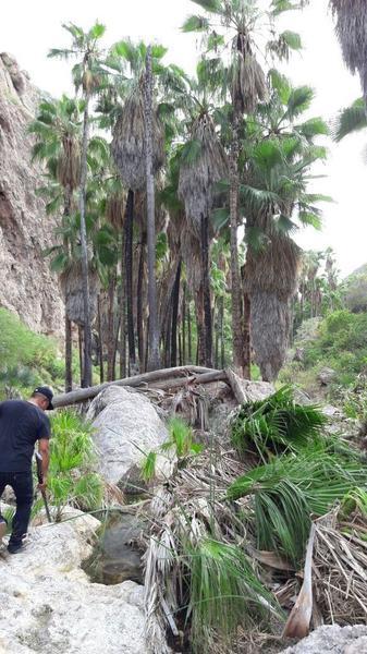 Foto Terreno en Venta en  Guaymas ,  Sonora  Rancho en Venta en San Carlos Sonora