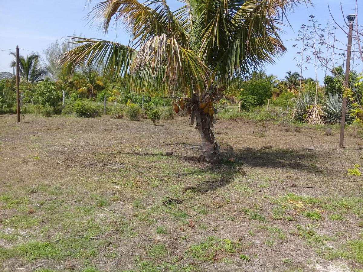 Picture Land in Sale in  Celestún ,  Yucatán  Celestún