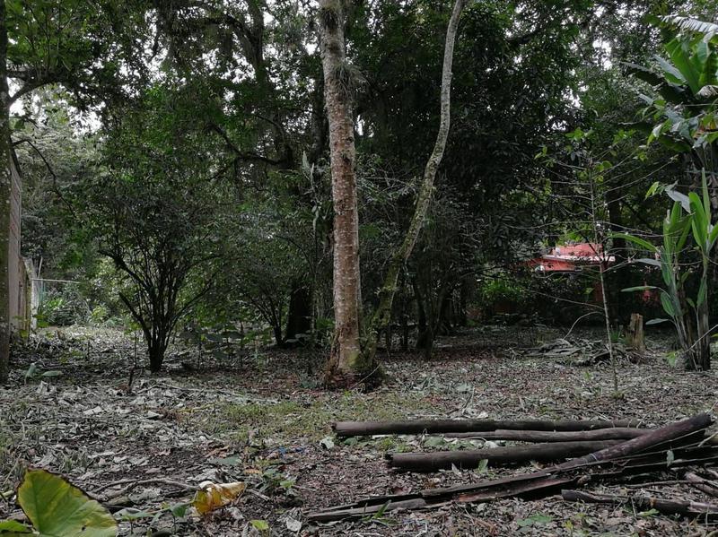 Foto Terreno en Venta en  La Pitaya,  Coatepec  La Pitaya
