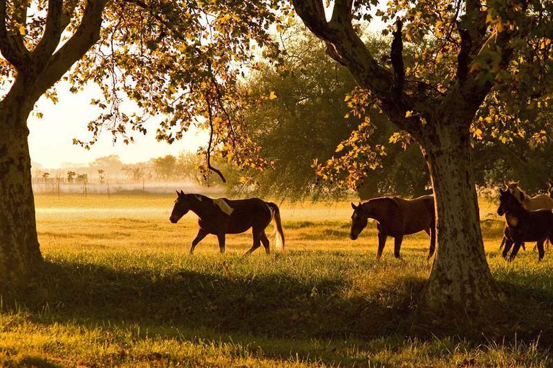 Foto Terreno en Venta en  Estancia Villa Maria,  Countries/B.Cerrado (Ezeiza)   Estancia Villa Maria - Lote 2000m2 Barrio Arroyito