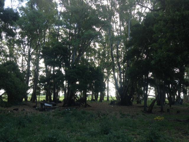 Foto Campo en Venta en  Pardo,  Las Flores  Las Flores, a 6 km R N°3 y 230 km de CABA