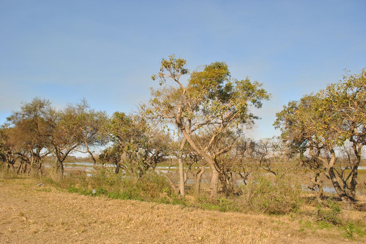 Foto Terreno en Venta en  Arroyo Leyes,  La Capital  Teófilo Madrejón - Ruta Prov. 1 km 16,5 - Lote 8 Manzana B Plano 146950