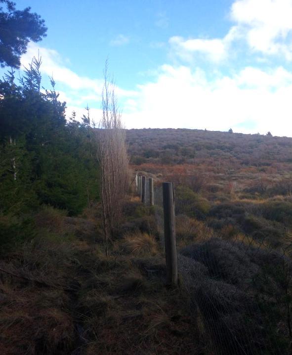 Foto Terreno en Venta en  San Carlos De Bariloche,  Bariloche  Ñirihuau