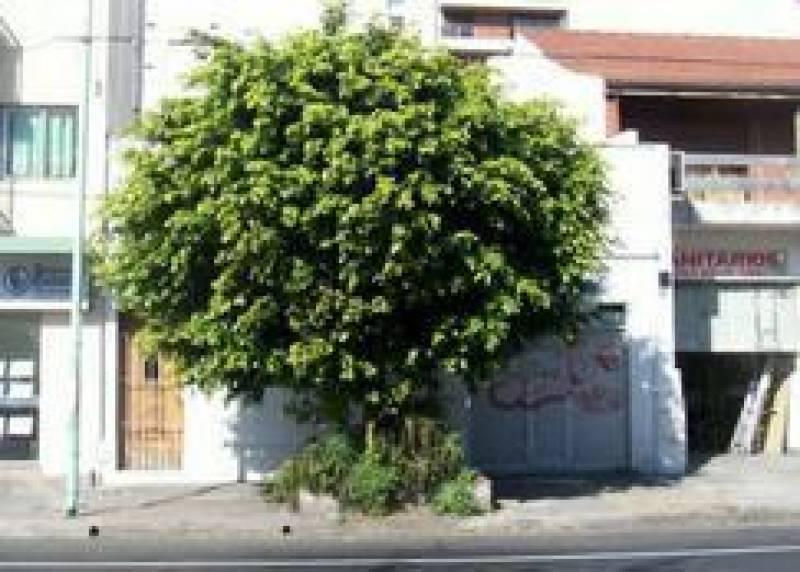 Foto Terreno en Venta en  Belgrano ,  Capital Federal  CONGRESO al 2800