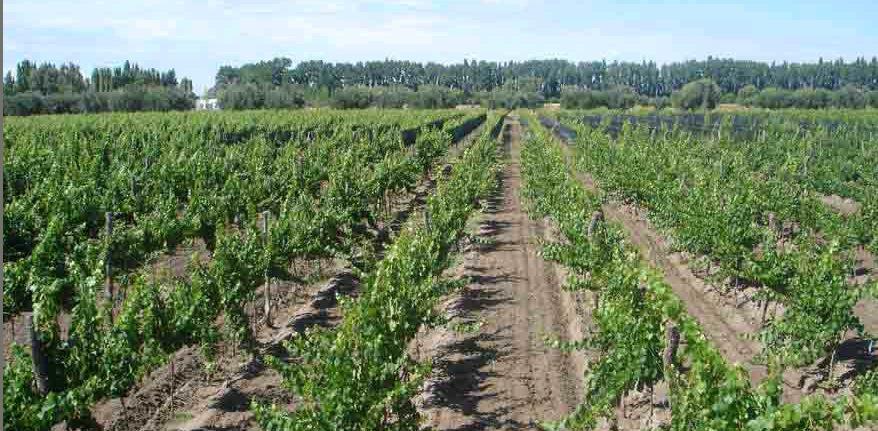 Foto Terreno en Venta en  Las Paredes,  San Rafael  Calitina Wine Resort