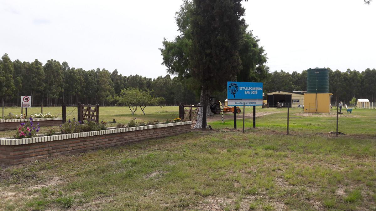 Foto Campo en Venta en  Federacion ,  Entre Rios  Plantación Forestal