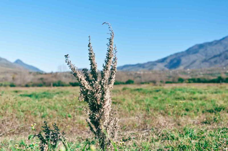 Foto Terreno en Venta en  Rodeo Grande,  Tafi Del Valle  Rodeo Grande