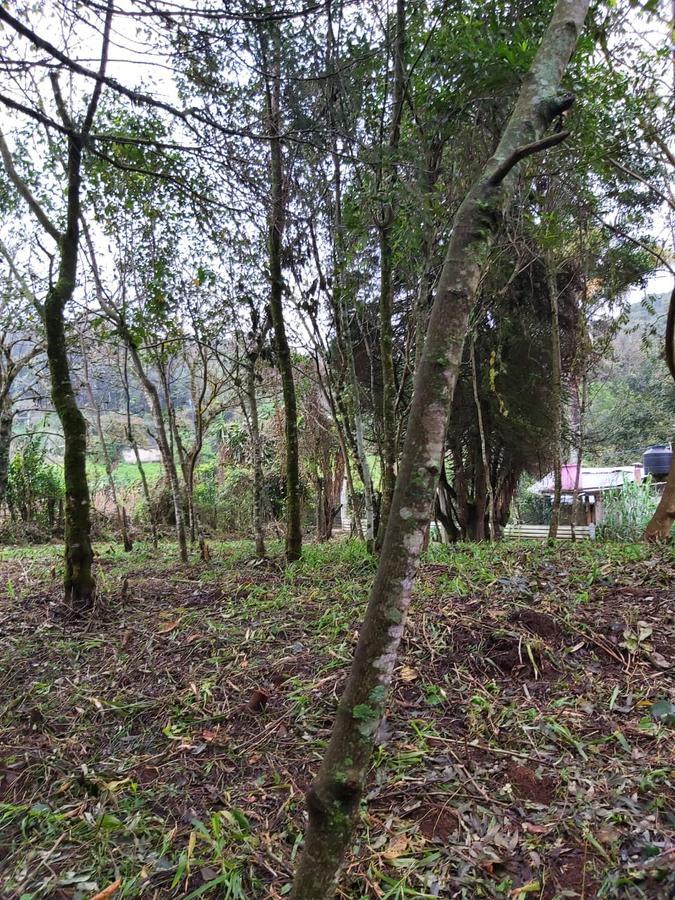 Foto Terreno en Venta en  Tlalnelhuayocan ,  Veracruz  Terreno en venta en Xalapa Zona Tlalnelhuayocan con al 4200