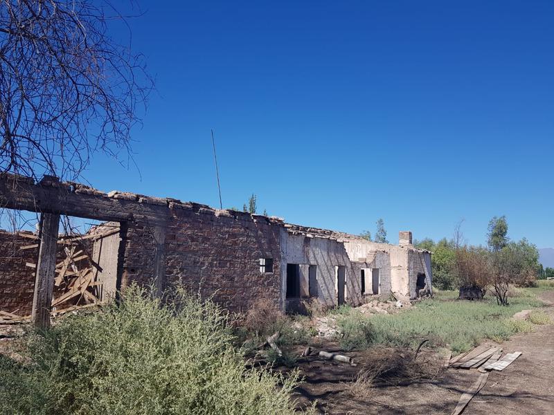 Foto Farms en Venta | Alquiler en  Lavalle ,  Mendoza  Ruta 40, Km 31. Lavalle