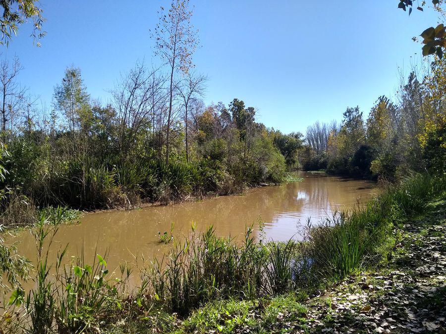 Foto Campo en Venta en  Mendez Grande,  Zona Delta San Fernando  Méndez Grande y Canal Arana
