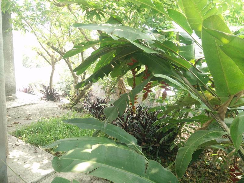 Foto Casa en Venta en  20 de Noviembre,  Tempoal  HCV1058-285 Ursulo Galván Casa