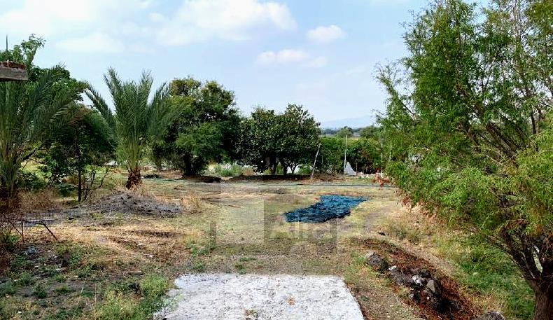 Foto Terreno en Venta en  Pueblo Nuevo,  León  al 36000