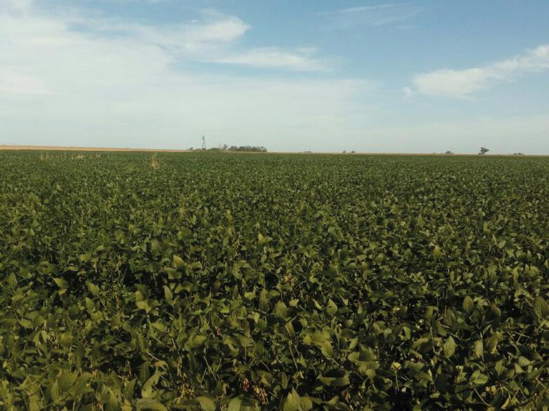 60 ha Agrícolas Murphy, Murphy, Santa Fe. Venta de División campos - Banchio Propiedades. Inmobiliaria en Rosario