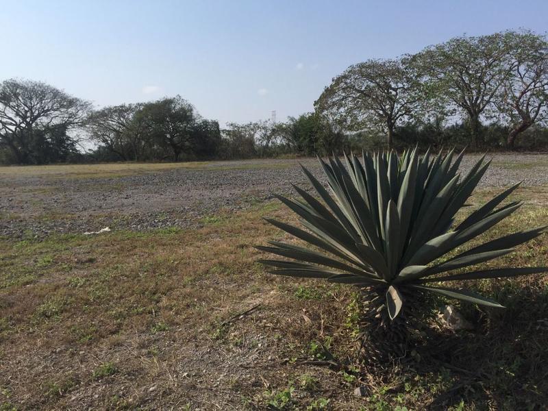 Foto Terreno en Venta en  2 Lomas,  Veracruz  LOC. DOS LOMAS, VERACRUZ, VER.