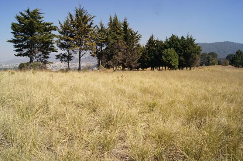 Foto Terreno en Venta en  San Miguel Ameyalco,  Lerma  Terreno para Inversionistas en Zona Carretera México Toluca