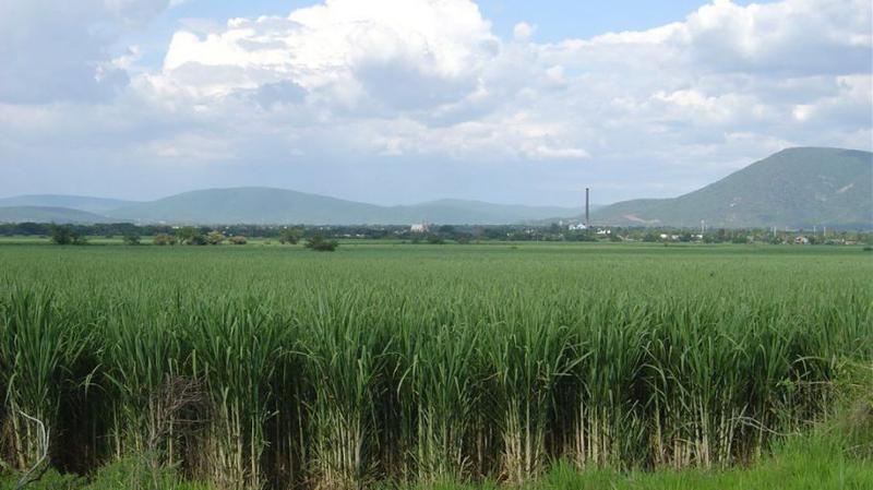 Foto Quinta en Venta en  Norte de Babahoyo,  Babahoyo  Se vende excelente hacienda de 305ha en producción en la Prov Los Rios