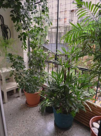 Foto Departamento en Venta en  Palermo Chico,  Palermo  Ruggieri al 2800