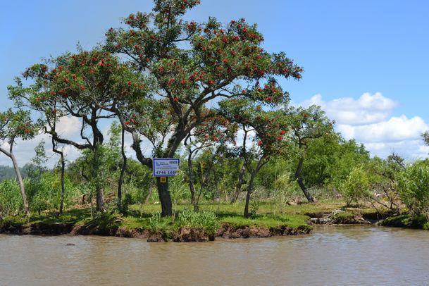 Foto Terreno en Venta en  Urion,  Zona Delta Tigre  Urion Parcelas 57 y 58