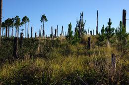 Foto Terreno en Venta en  Yacanto Calamuchita,  Calamuchita  Villa Yacanto de Calamuchita  Ruta Provincial 228 Km