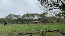 Foto Campo en Venta en  Loma Verde,  Escobar  Luis Tagle
