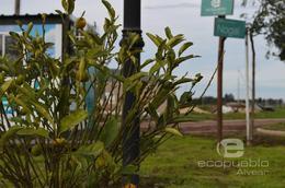 Foto Terreno en Venta en  Alvear,  Rosario  Eco Pueblo - Alvear Ruta al 100