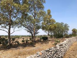 Foto Terreno en Venta en  Rancho o rancheria Tunas Blancas,  Ezequiel Montes  Venta Terreno en Corredor Turístico a Peña de Bernal