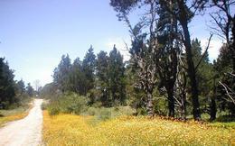 Foto Terreno en Venta en  La Pedrera ,  Rocha  terreno en Santa Isabel