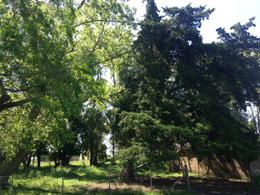 Foto Campo en Venta en  Las Flores ,  Interior Buenos Aires  Las Flores, a 7km de RN°3