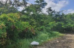 Foto Terreno en Venta en  Mérida ,  Yucatán  terreno de oportunidad en Komchen Yucatan norte de Mèrida