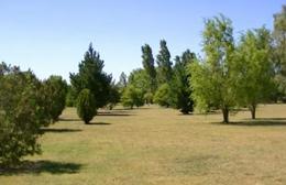 Foto Terreno en Venta en  Haras Del Sur,  Countries/B.Cerrado (La Plata)  Autovia 2 72