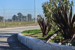 Foto Terreno en Venta en  Alvear,  Rosario  EcoPueblo - Alvear - Avenida principal