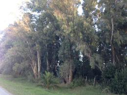 Foto Campo en Venta en  Las Flores,  Las Flores  Las Flores, Km222 R3, sobre pavimento Villa Pardo